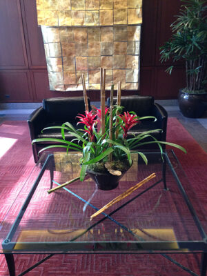 Bromeliad-Arrangement-Trio-in-Tapered-Cylinder-with-Bamboo