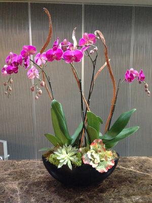 Orchid-Arrangement-four-stalks-in-oval-bowl