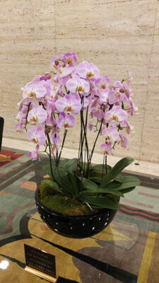 Website-Blooming-Orchid-Arrangement-Extra-Large-20190624_125247