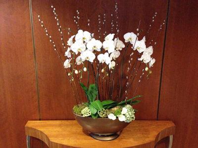 Website-Blooming-Orchid-Arrangement-Large-D