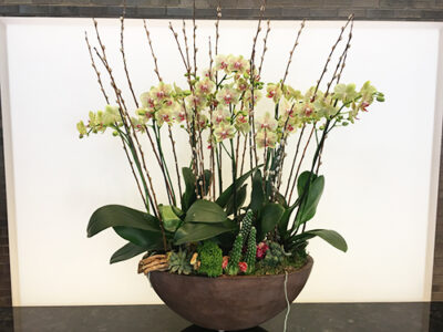 Website-Blooming-Orchid-Arrangement-Large-Yellow-with-Pussy-Willows-and-Succulents