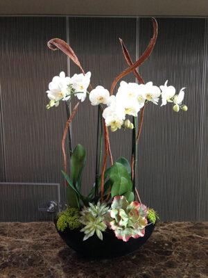 Website-Blooming-Orchid-Arrangement-Medium-C