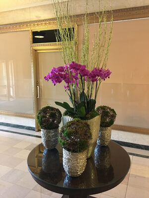 Website-Blooming-Orchid-Arrangement-Purple-with-moss-coated-birch-branches-a-grouping-of-moss-coated-birch-brach-spheres
