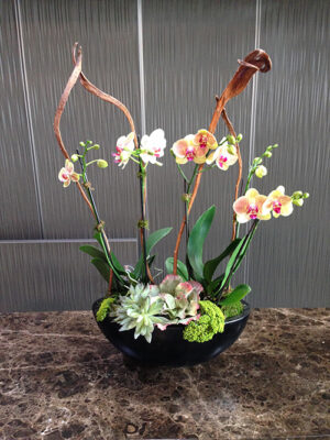 Website-Blooming-Orchid-Arrangement-four-stalks-in-oval-bowl-A