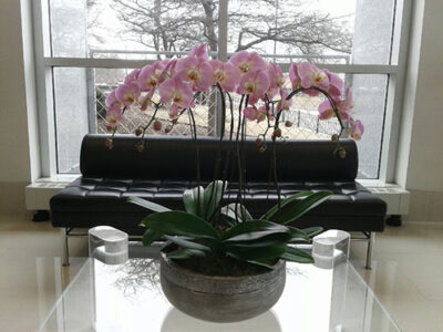 Website-Blooming-Orchid-Arrangement-lavender-with-three-six-inch-doubles