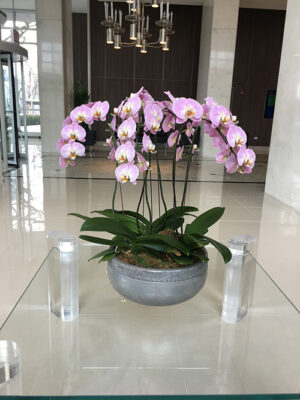 Website-Blooming-Orchid-Arrangement-variegated-pink-with-three-six-inch-doubles