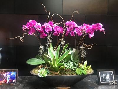 Website-Blooming-Orchid-Arrangement-with-kiwi-vine-sans-and-succulents