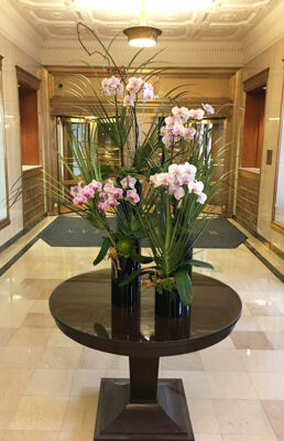 Website-Blooming-Orchid-Arrangement-with-kiwi-vine-succulents-decorative-wood-and-accents-in-various-tall-black-glass-cylinders-with-cut-palm-fronds