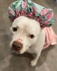 Stormi, a rescue dog, is Spa Ready