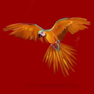 Parrot Adam Sinai