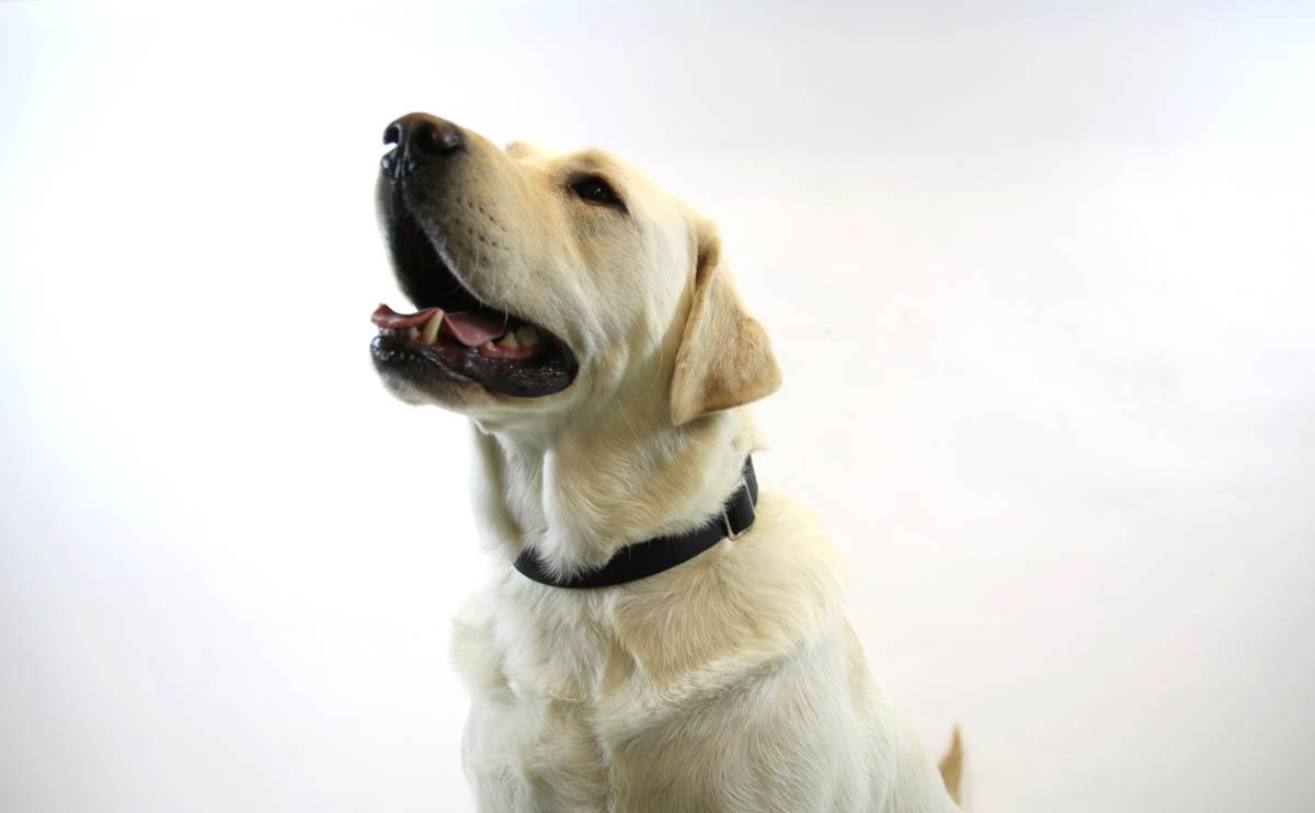 Dog Blog – Our January Top Dog