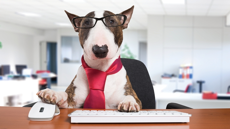 Dogs In The Workplace