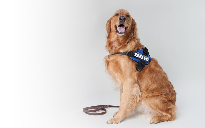 Working Canines: Dog Professions