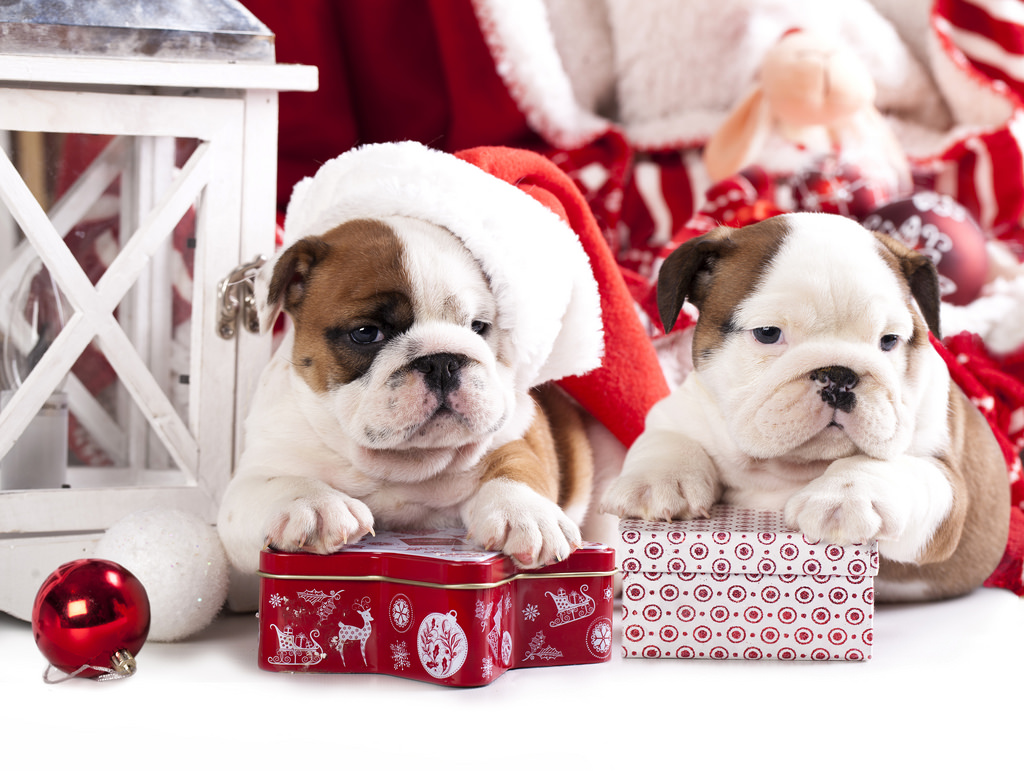 Spending the Holidays with Your Pups