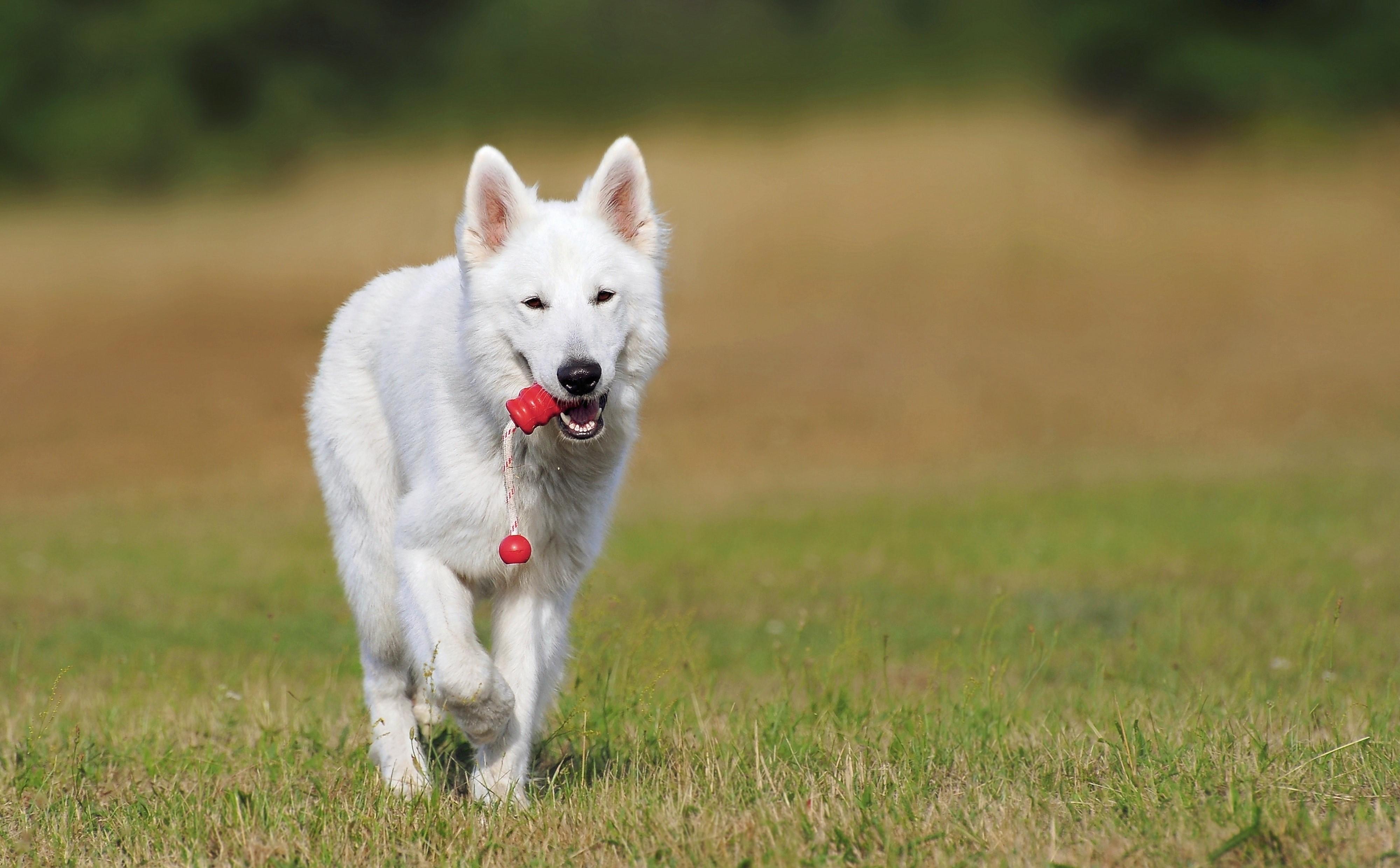 Dog Training & Assistance