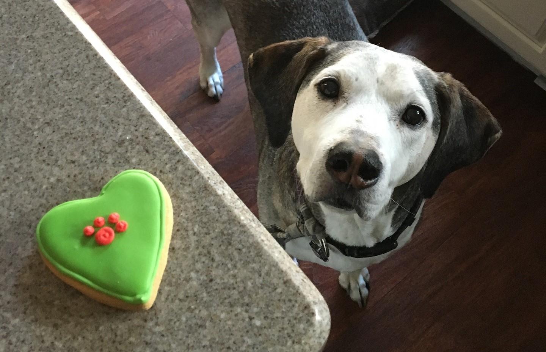 Dog Bakeries