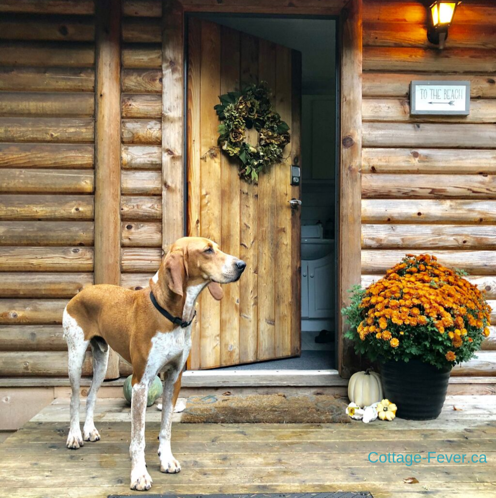 Coonhound autumn decor wreath pumpkins door