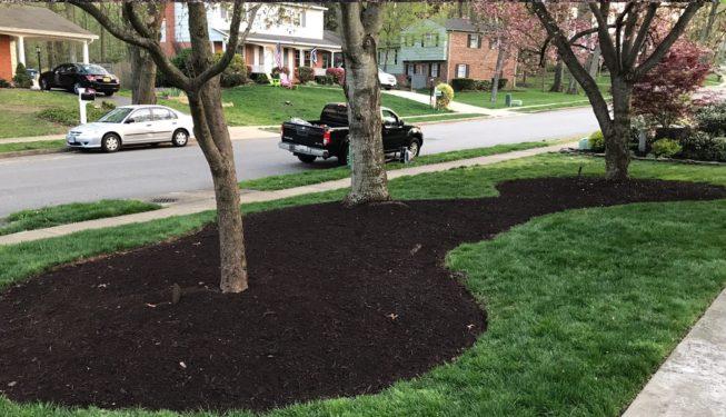 landscaping-service-mulching-tree-springfield