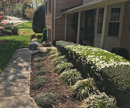 mulching-plants-cleanup