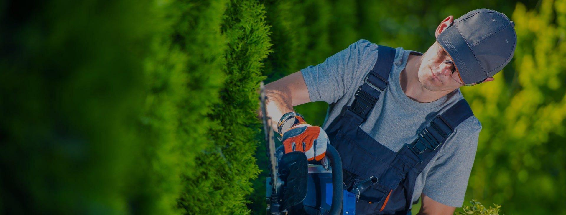 trimming-shrubs