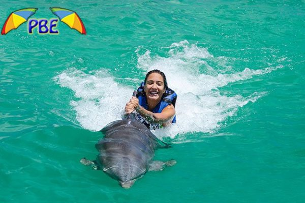 Dolphin Funtastic Excursion