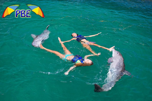 Dolphin Extreme Excursion