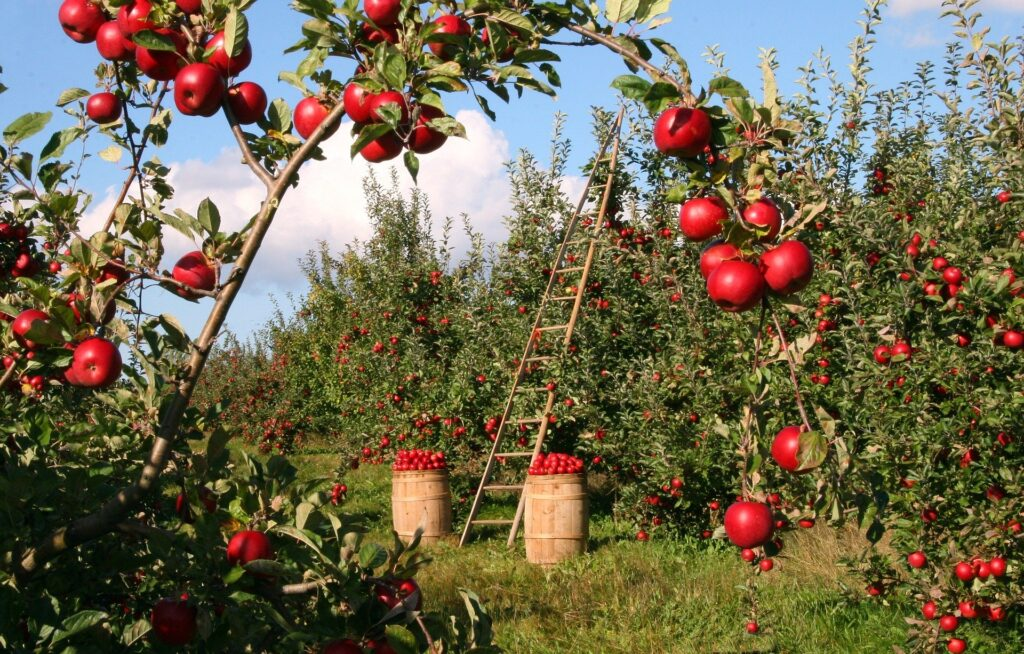 Personally, I think an apple orchard in my yard would be the ideal permaculture setup, but alas I haven't got the space.