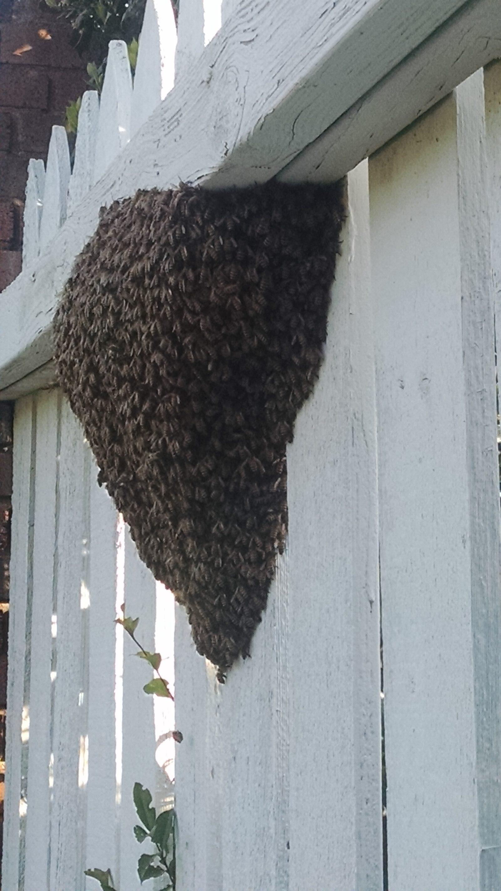 4.19.16 Bennar swarm
