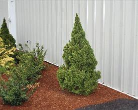 gallery of shrubs