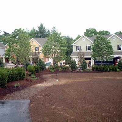 Residential Development Park Planting