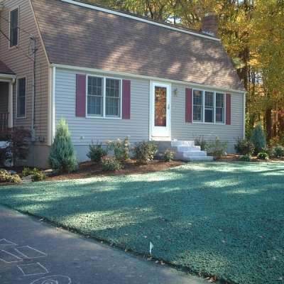 Residential Planting and Hydroseeded Lawn