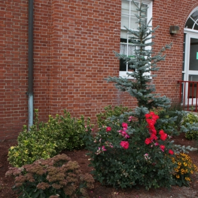 East Bridgewater Public School planting