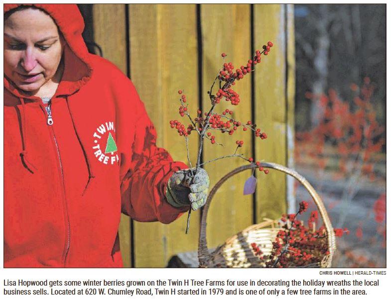 Lisa Hopwood - Gathering Winter Berries @ Twin H Tree Farm