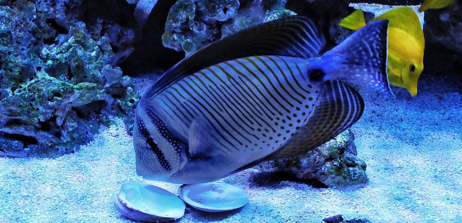 Aquarium Nook