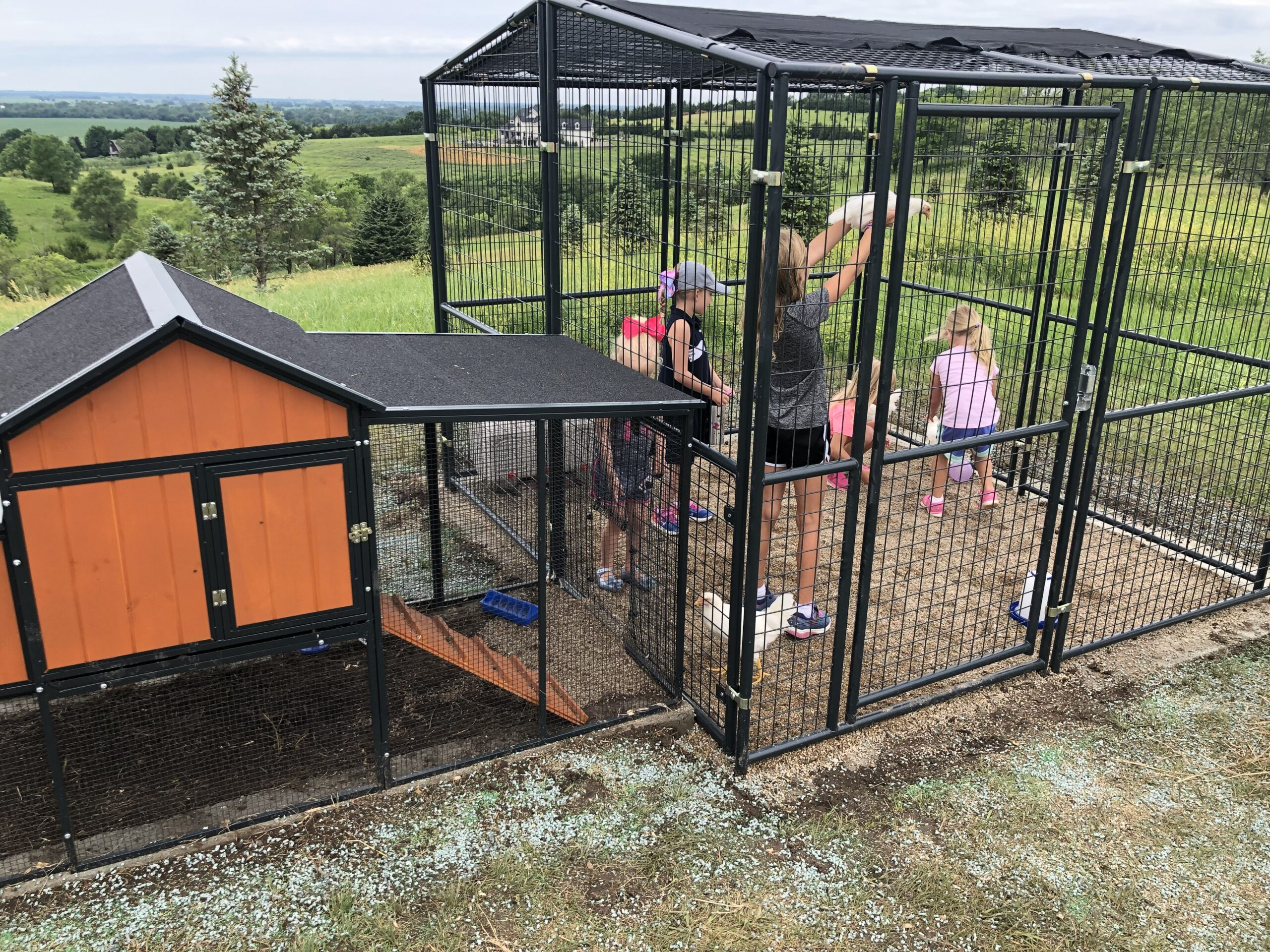 Children's Chicken Coop