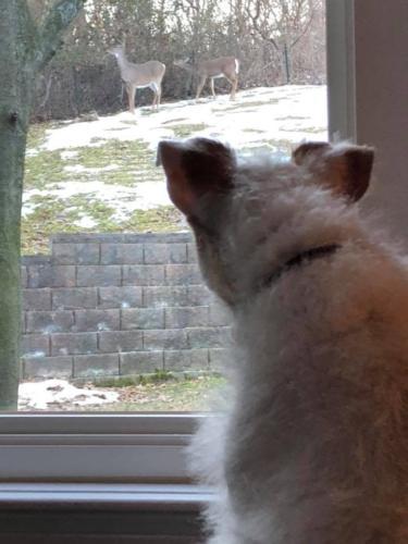 "Nellie ""watching"" the neighbors!!!"