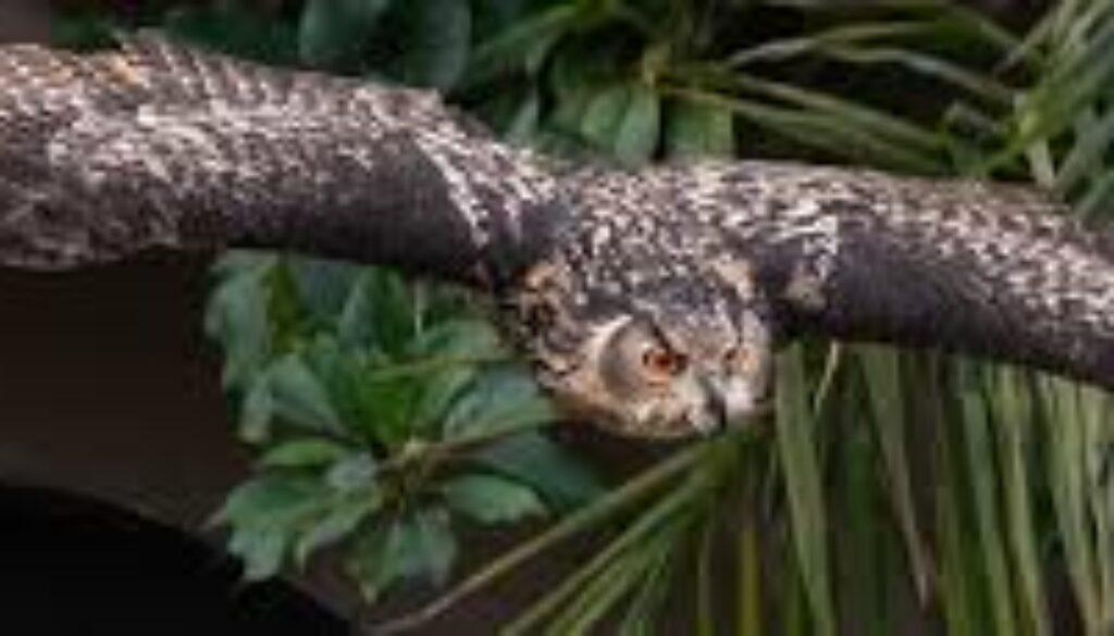 owl la zoo