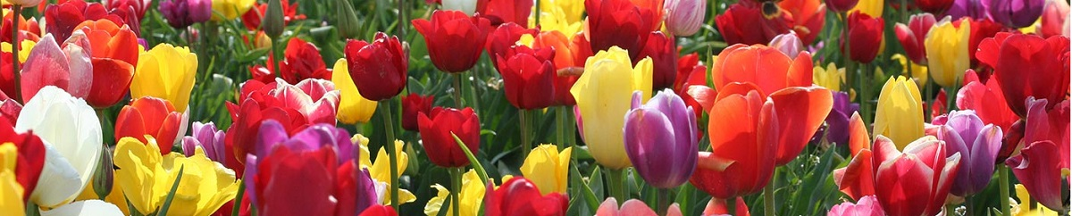Five Leading Indicators of Spring in NYC