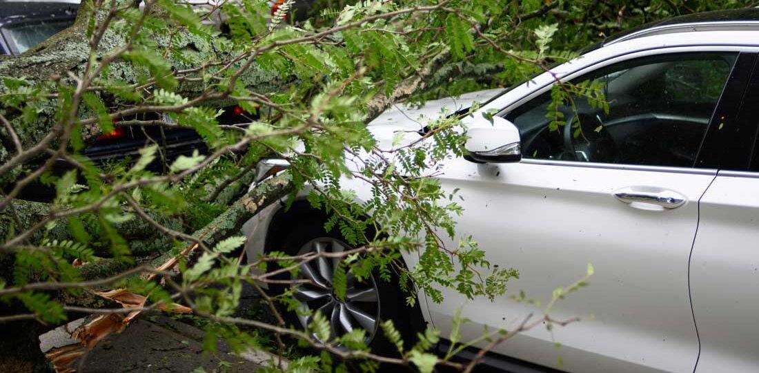 Tree on car hood