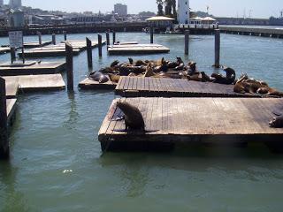 sea lions in sf