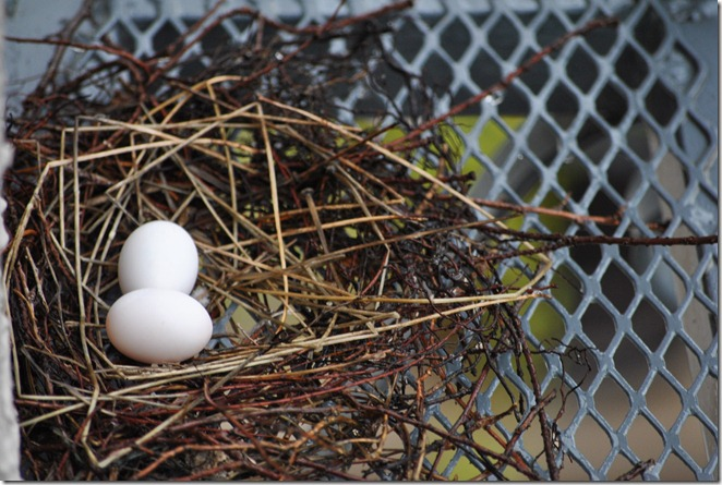 bird eggs on a ledge
