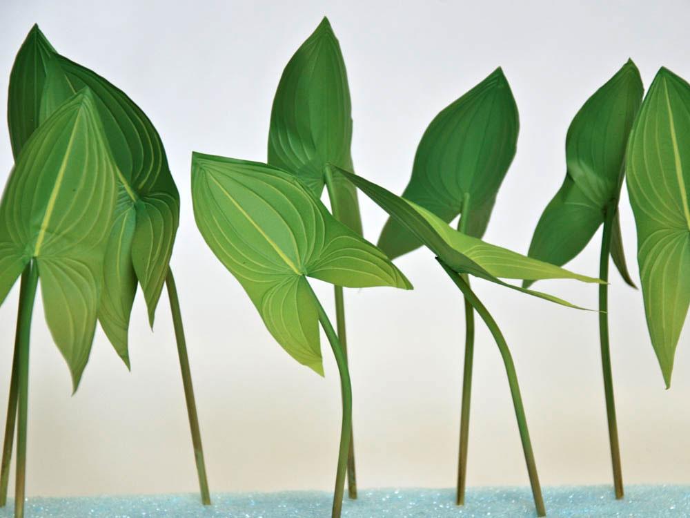 plants-model1