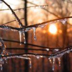 Icy sunset, ice on a tree branch, Guy Sagi, Raeford, Hoke County, North Carolina