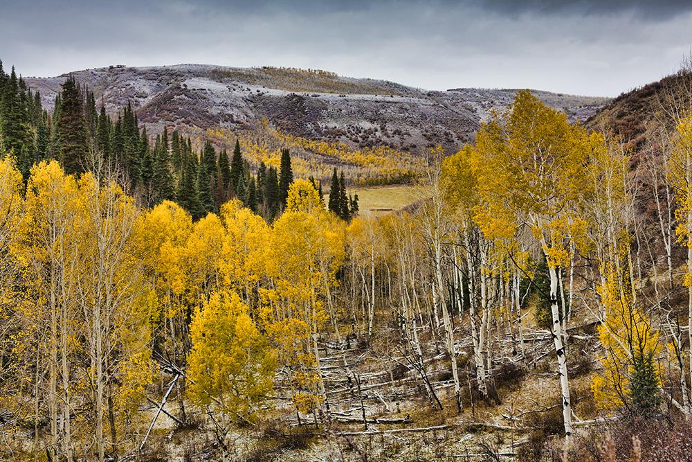 High elevation Colorado, Guy Sagi