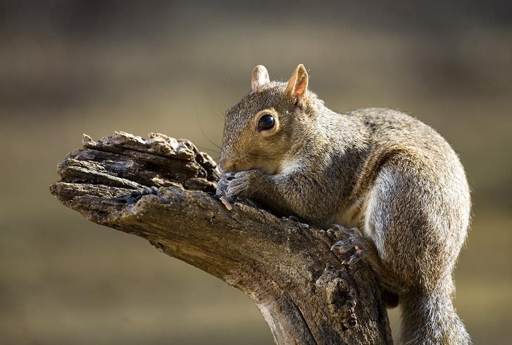 squirrel praying, Guy Sagi