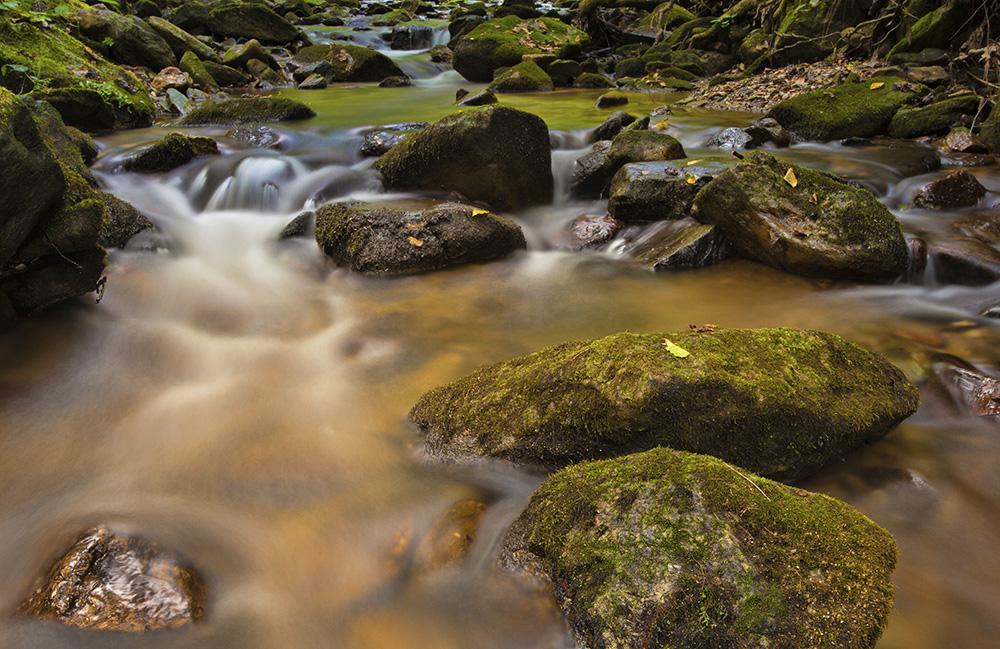 Pisgah National Forest, Guy Sagi