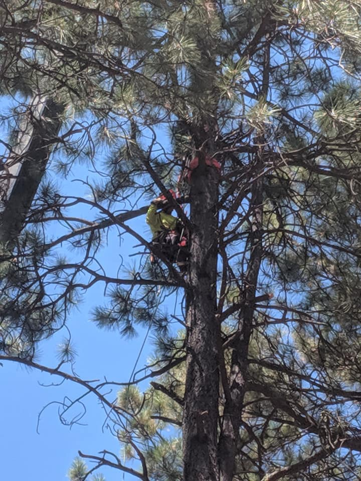 South West Fire Defense & Tree Services