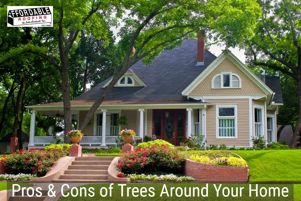 Trees are beautiful but they could potentially lead to bigger issues with your home and roof
