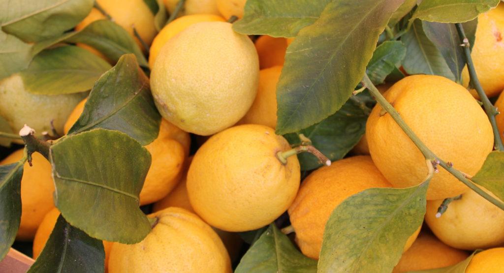 cropped Lemons Nice Market 2015