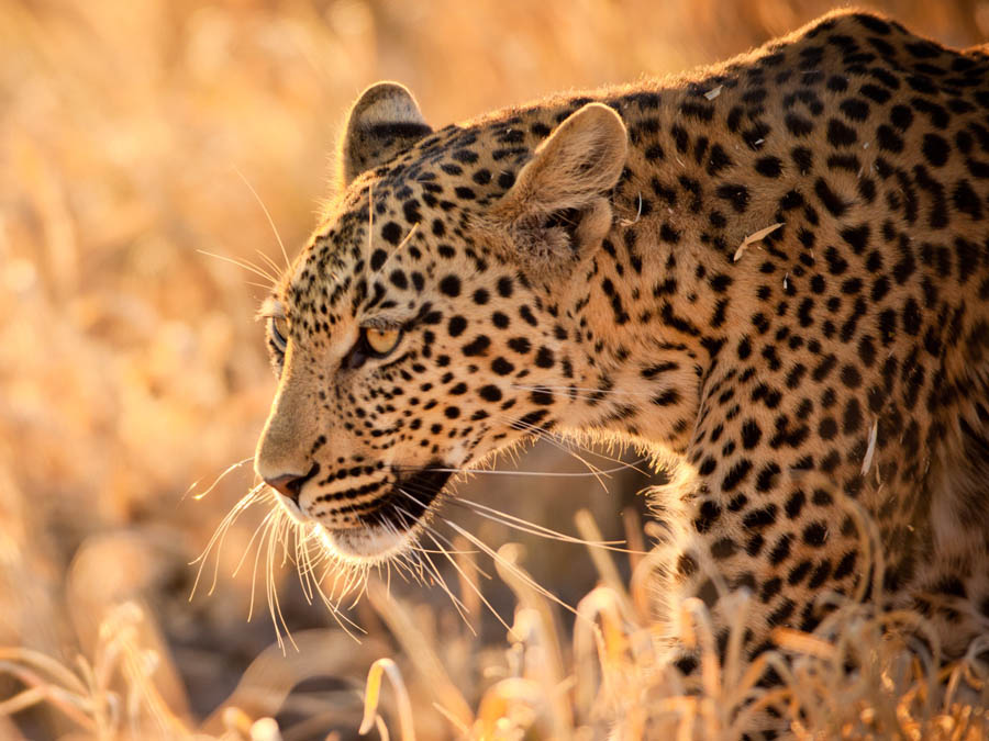 12 Days Luxury Getaway to South Africa